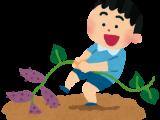 幼稚園児がサツマイモの収穫を体験