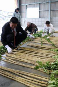 世界一長い大根「母本選抜」・伝統野菜を守る!