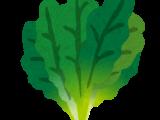 農業塾「葉菜専門コース」閉講式を開催