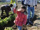 「守口大根」収穫体験と試食会を開催