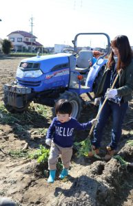 「守口大根」収穫体験と試食会