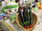 布袋支店で野菜の収穫を行いました