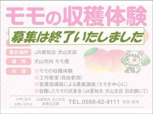 桃収穫体験