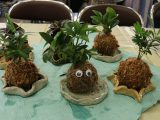 女性部扶桑支部 第3回セミナー「苔玉作り」を開催しました