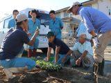 農業塾「キャベツの栽培講座」で苗の定植指導をしました