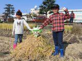 親子農業体験を実施しました