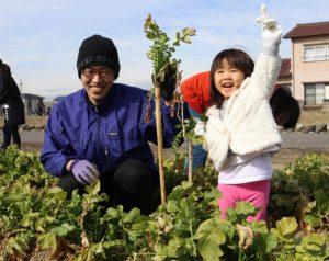 守口大根の収穫体験を開催「収穫する参加者」2
