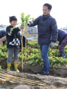 守口大根の収穫体験を開催「収穫する参加者」3