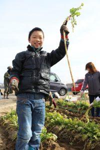 守口大根の収穫体験を開催「収穫する参加者」4