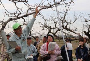 桃の講習会