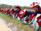 第126回愛知県農業祭献穀事業 お田植祭を行いました