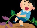 犬山市子ども大学「サツマイモ・ダイコンの収穫」