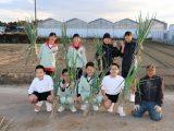中学生が「越津ねぎ」の収穫体験