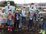 犬山市子ども大学第2回 「さつまいも収穫」開催しました