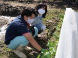 農業塾「家庭菜園コース」収穫をしました