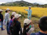 犬山市子ども大学「稲刈り」を行いました。