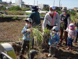 もち米の稲刈り体験を開催しました