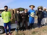 農福連携 白菜出荷の労働力支援を開始しました