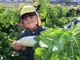 布袋西保育園の園児がダイコンの収穫体験を行いました