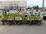 江南西部中学校の生徒が大根収穫体験をおこないました。