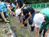 草井小学校ビオトープで田植え体験を行いました