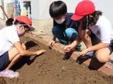 岩倉東小学校「秋冬野菜食農教室」開催